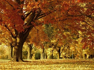 Herbstspaziergang 2017