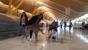 am Flughafen Madrid