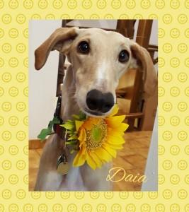 Daia - Blumenmädchen