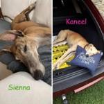 Kaneel und Sienna